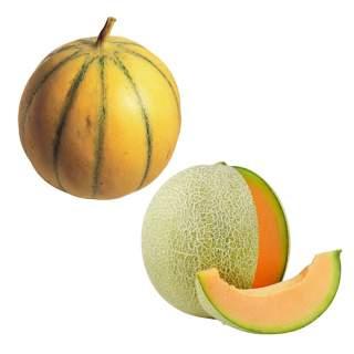 6 plants de melon