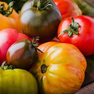 6 plants de tomates