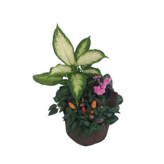 Composition fleurie pot 8L