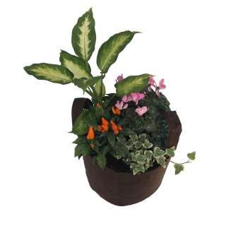 Composition fleurie pot 16L