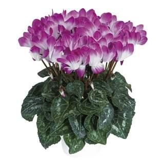 Cyclamen moyen violet
